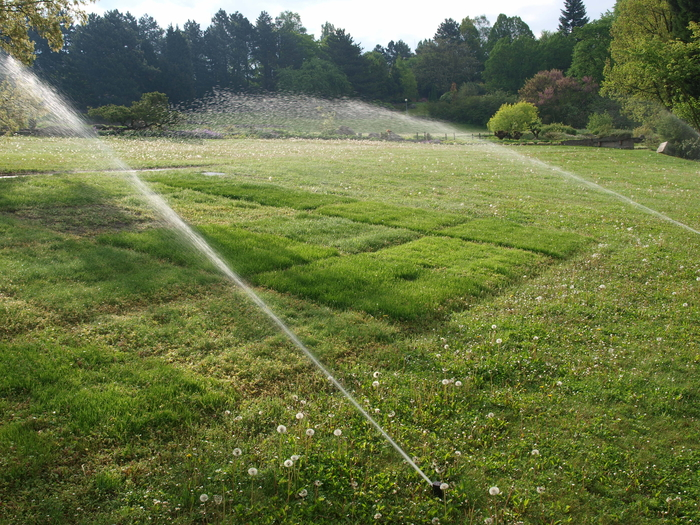 Irrigation of the trial 15.5.2017
